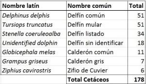 Número total de avistamientos de cetáceos por especie