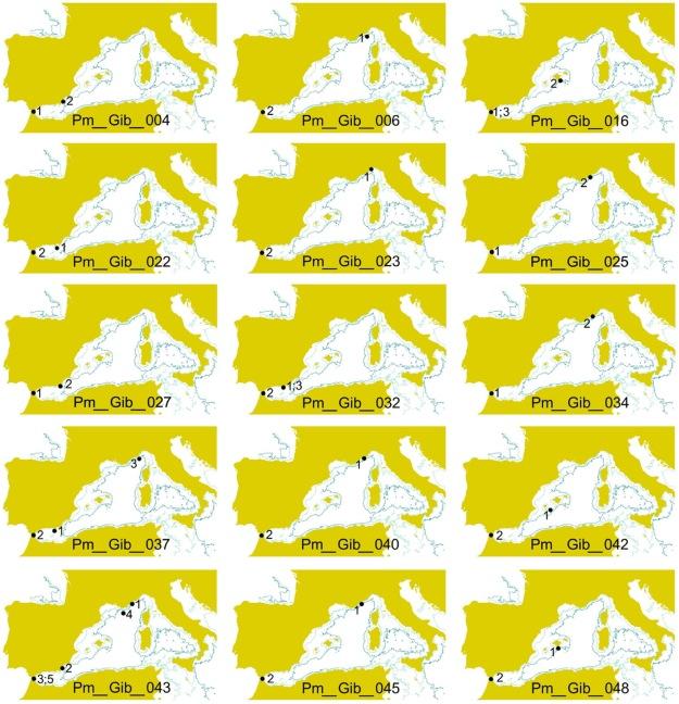 Mapas de los movimientos de 15 cachalotes en el Mediterráneo (Carpinelli et al. 2014)